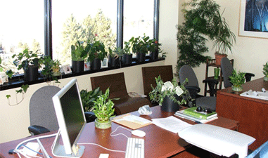 Greenery in Office